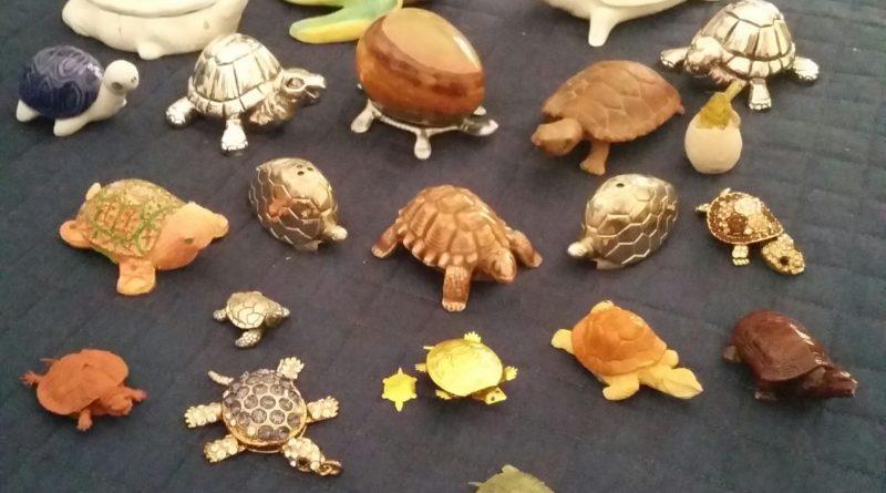 """Improbabile"" intervista ad una tartaruga"